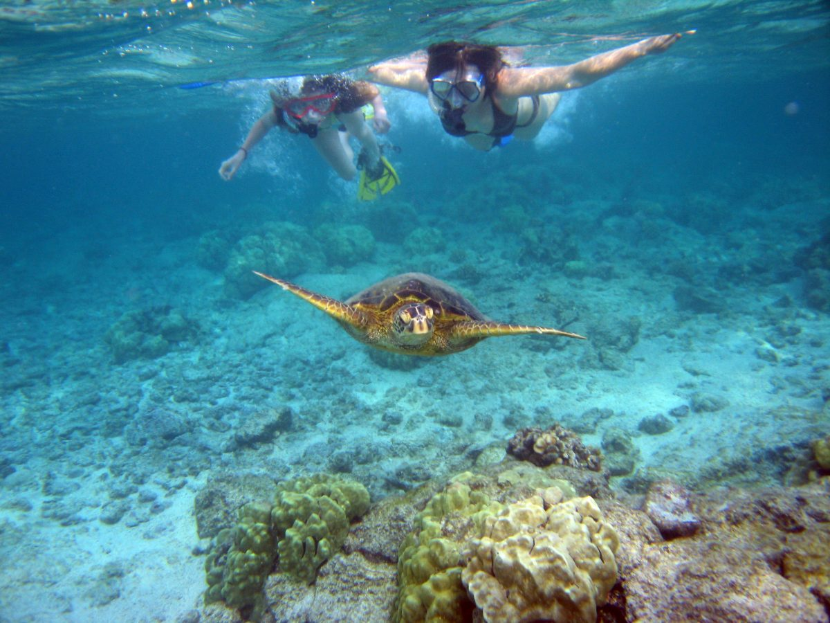 Snorkel in Turtle Town, Maui, Hawaii