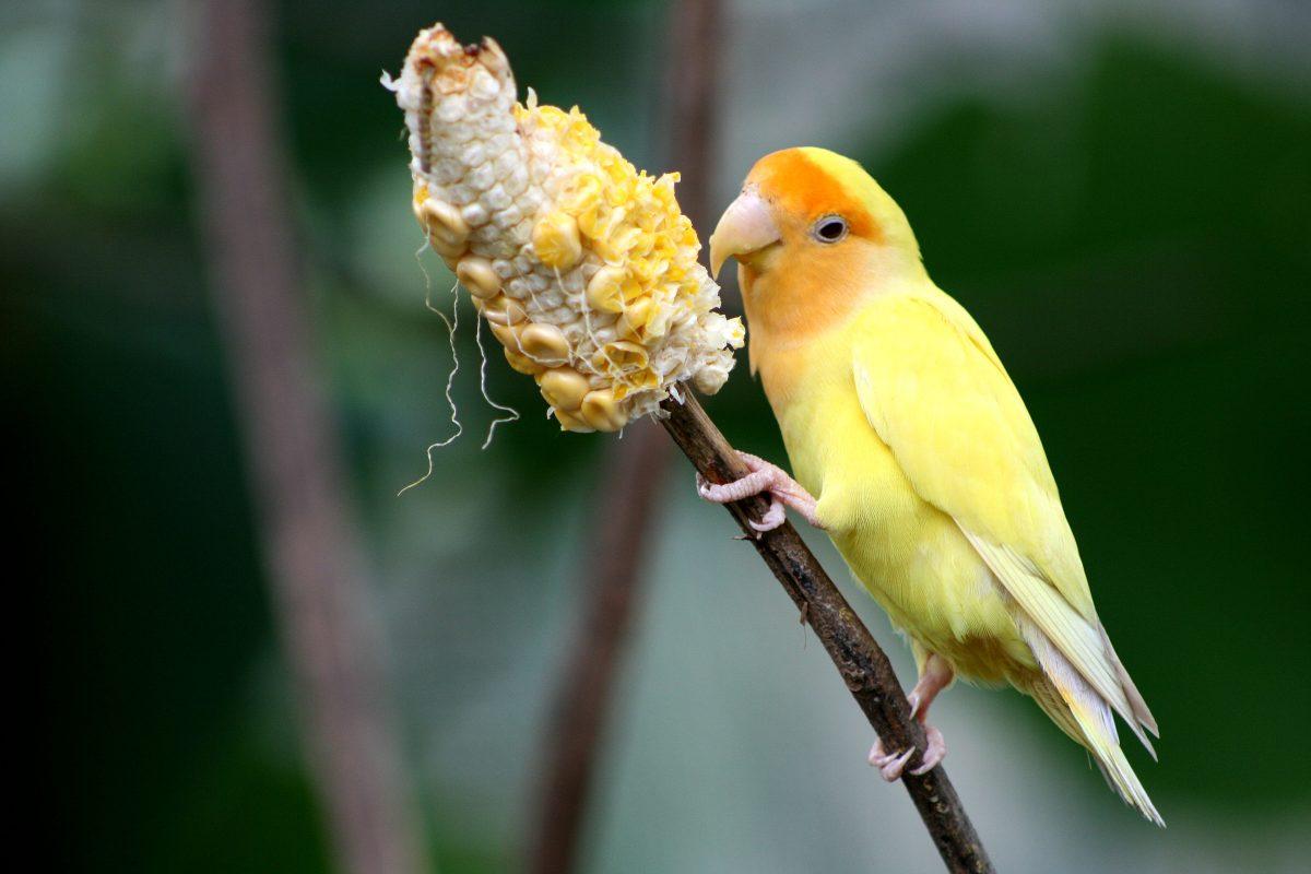 Unique yellow orange bird at KL Birdpark