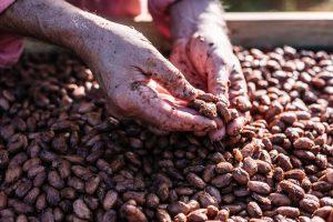 Chocolate farm, Lydgate Farms, Kauai, Hawaii