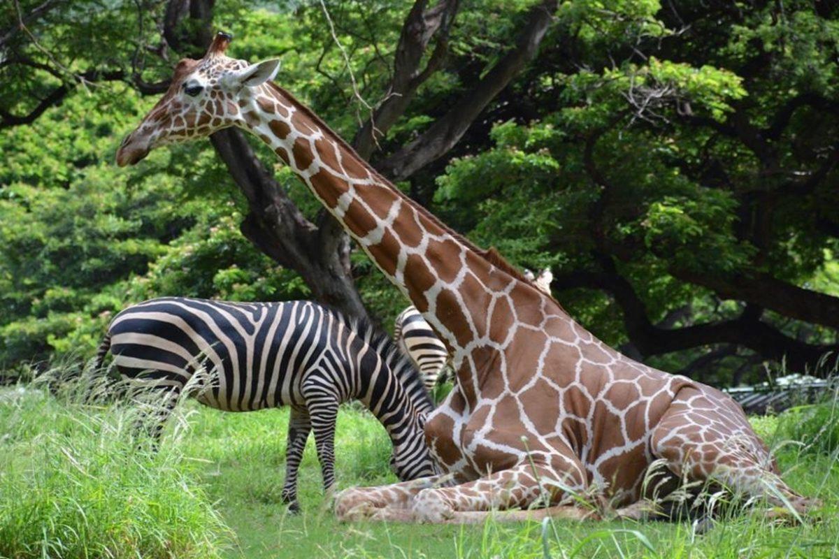 Hawaii Zoo, Honolulu, USA