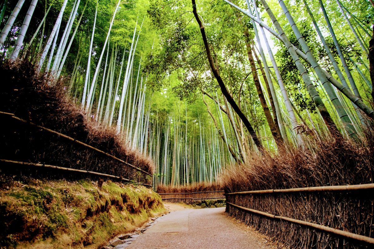 A peaceful pathway in Arashimaya Bamboo Grove in Kyoto, Japan