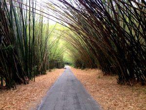Bamboo Cathedral, Hike, Trinidad, Cuba