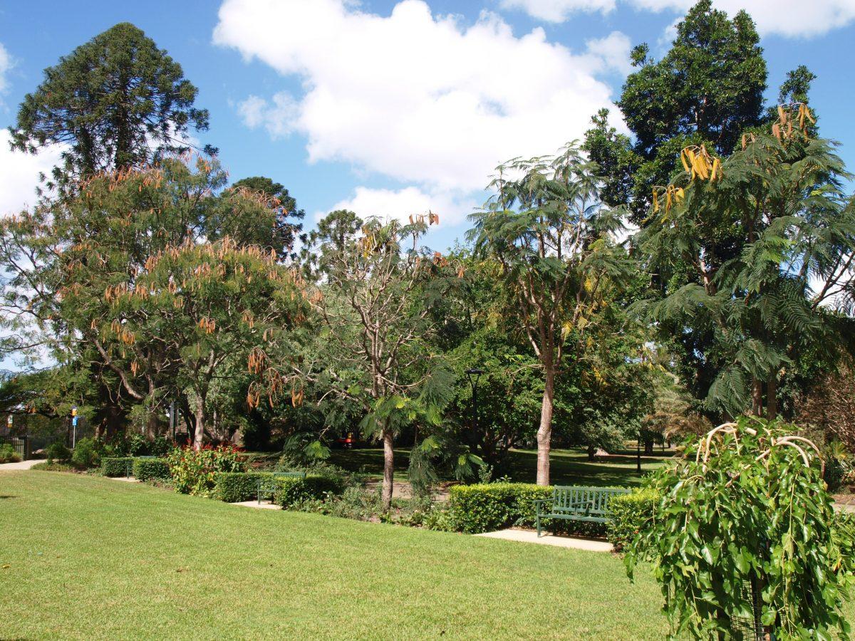 Botanic Gardens 1 - Things To Do In Brisbane, Queensland, Australia
