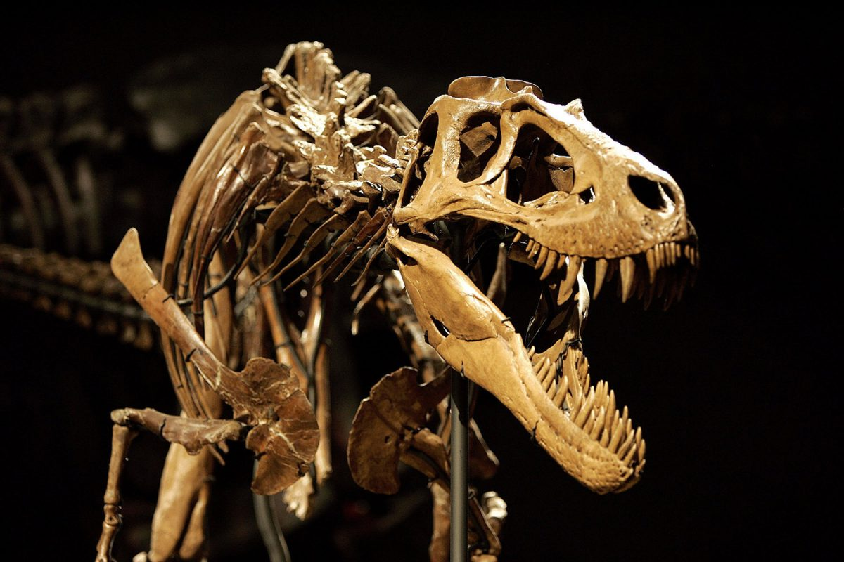 The complete fossil of a Dinosaur at Calgary's Royal Tyrrell Museum