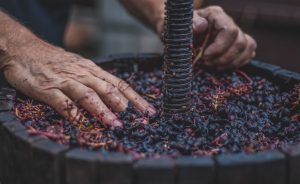 A wine making session on the Rome Wine Tour