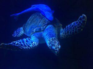 Zoo Aquarium Madrid