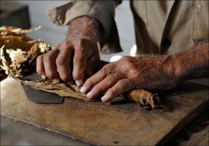 Cigar rolling, Vinales, Tobacco Farm, Cuba
