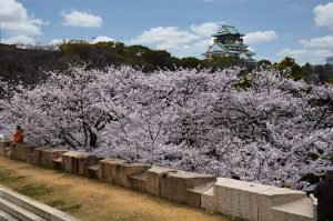 Osaka Castle, Japan, Cherry Blossoms