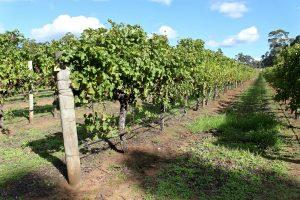Winery Margaret River Perth, Western Australia