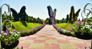 Dubai Butterfly Garden, UAE