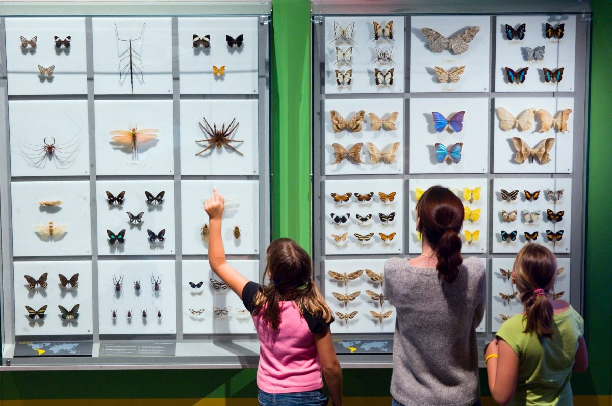 insect - Best Things to Do in Montreal, Canada