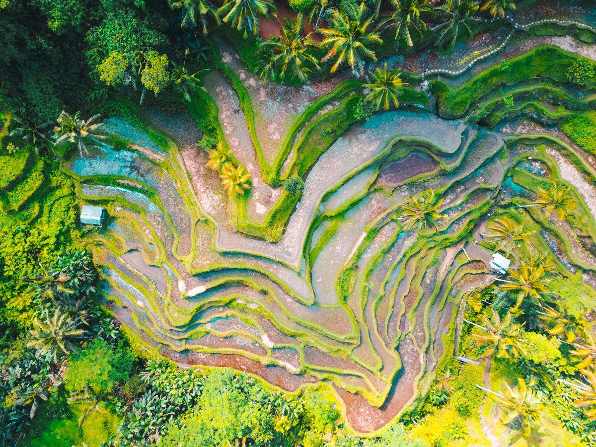 Aerial view of Paddy fields in Ubud Bali