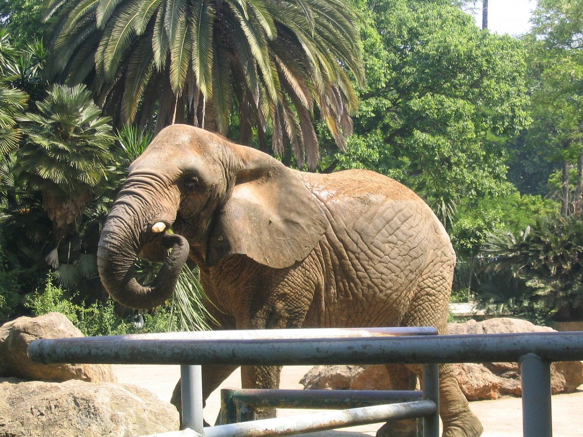 Lovely picture of an elephant taken from The Barcelona Zoo