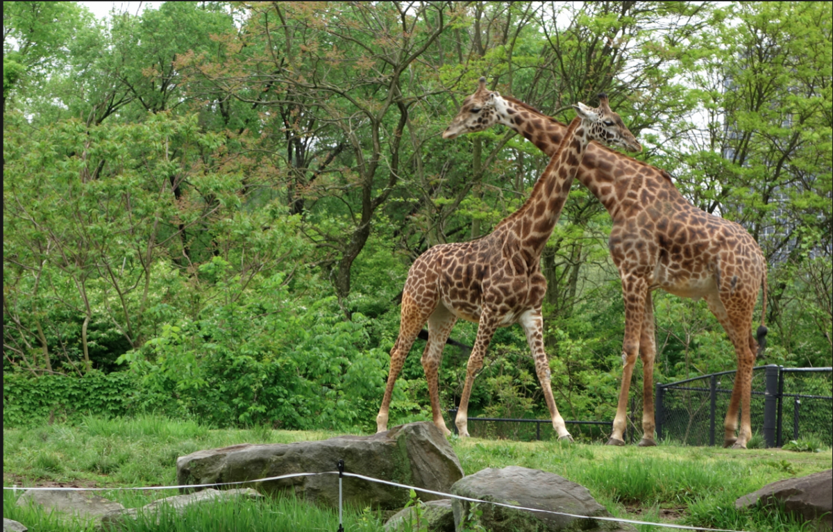 Get up close and personal with these long-necked mammals at Pittsburgh Zoo's Giraffe Meet and Greet