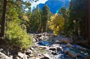 Yosemite Creek Campground, Yosemite National Park