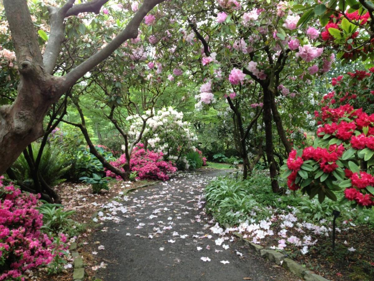 The Crystal Springs Rhododendron Garden, Portland