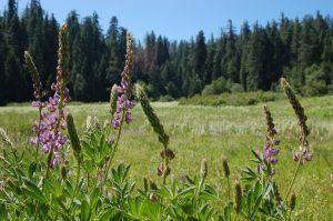 Hodgdon Meadow Campground, Yosemite National Park