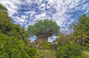 Disney's Animal Kingdom, Orlando, Florida