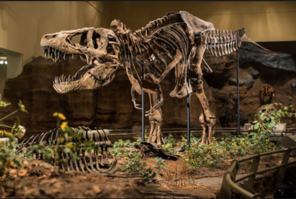 Carnegie Museum of Natural History showcases a fascinating dinosaur display, replica of the Amazon rainforest and several other informative and captivating exhibits