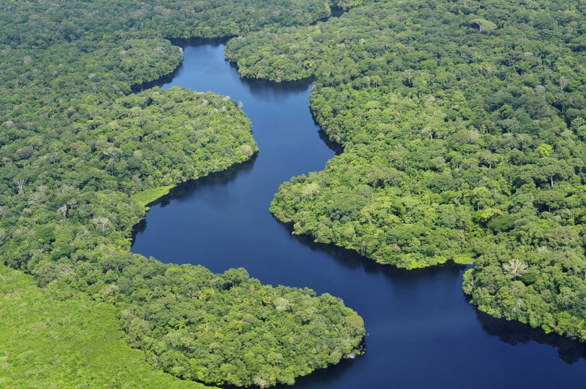 Greenery Amazon River in Peru