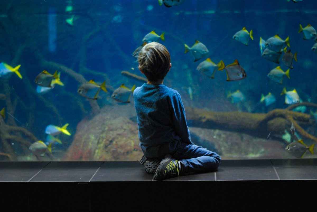 Head to Belle Island Aquarium, the oldest aquarium in the country, it has more than 1,000 fishes and 118 different species of aquatic creatures
