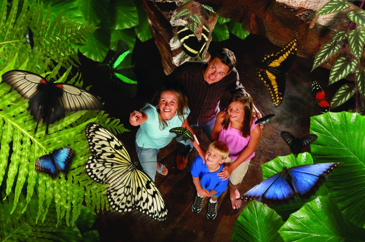 Branson's Butterfly Palace is home to exotic wildlife as well as captivating flowerbeds and enchanting greenery