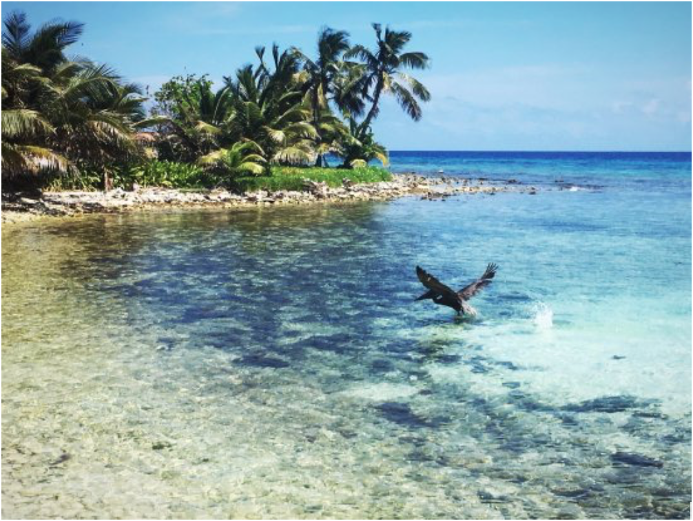 The Laughing Bird Caye National Park is a certified UNESCO World Heritage Site with a diverse abundance of coral reefs and marine life found below the waters