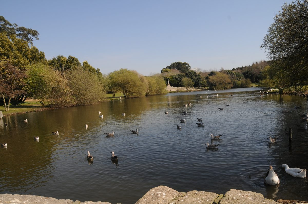 View of Parque da Cidade do Porto's lake and its residing wildlife