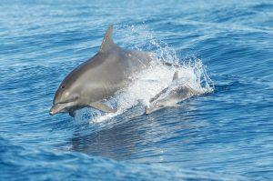 Dolpins, Florida Dolphin Tours, Orlando, Florida