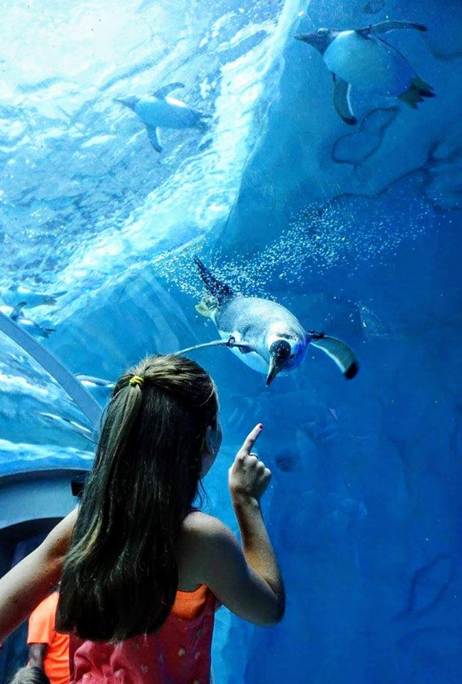 Visitors can enjoying watching delightful cute penguins dive, splash, waddle and even fish in a 25ft deep pool