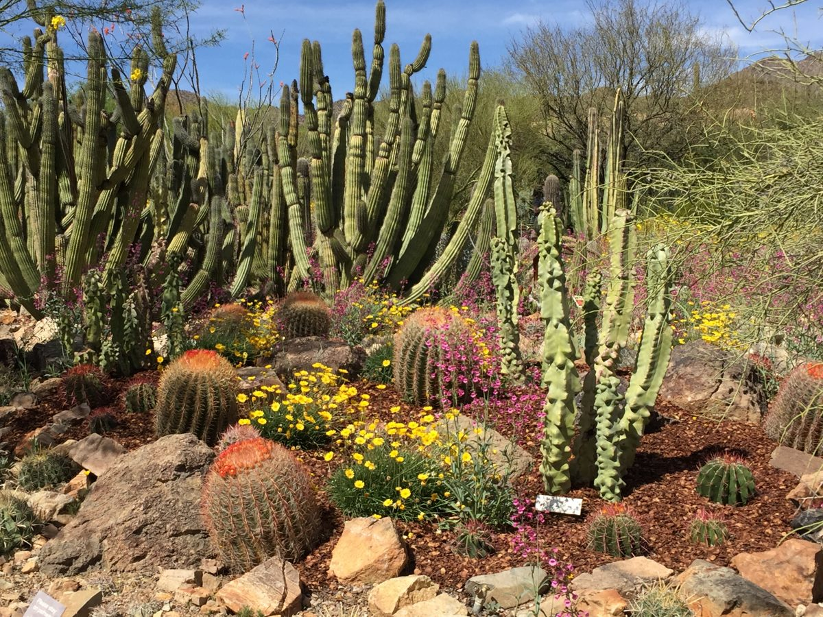 Cactus displays at Canoran Desert Museum, Tucson