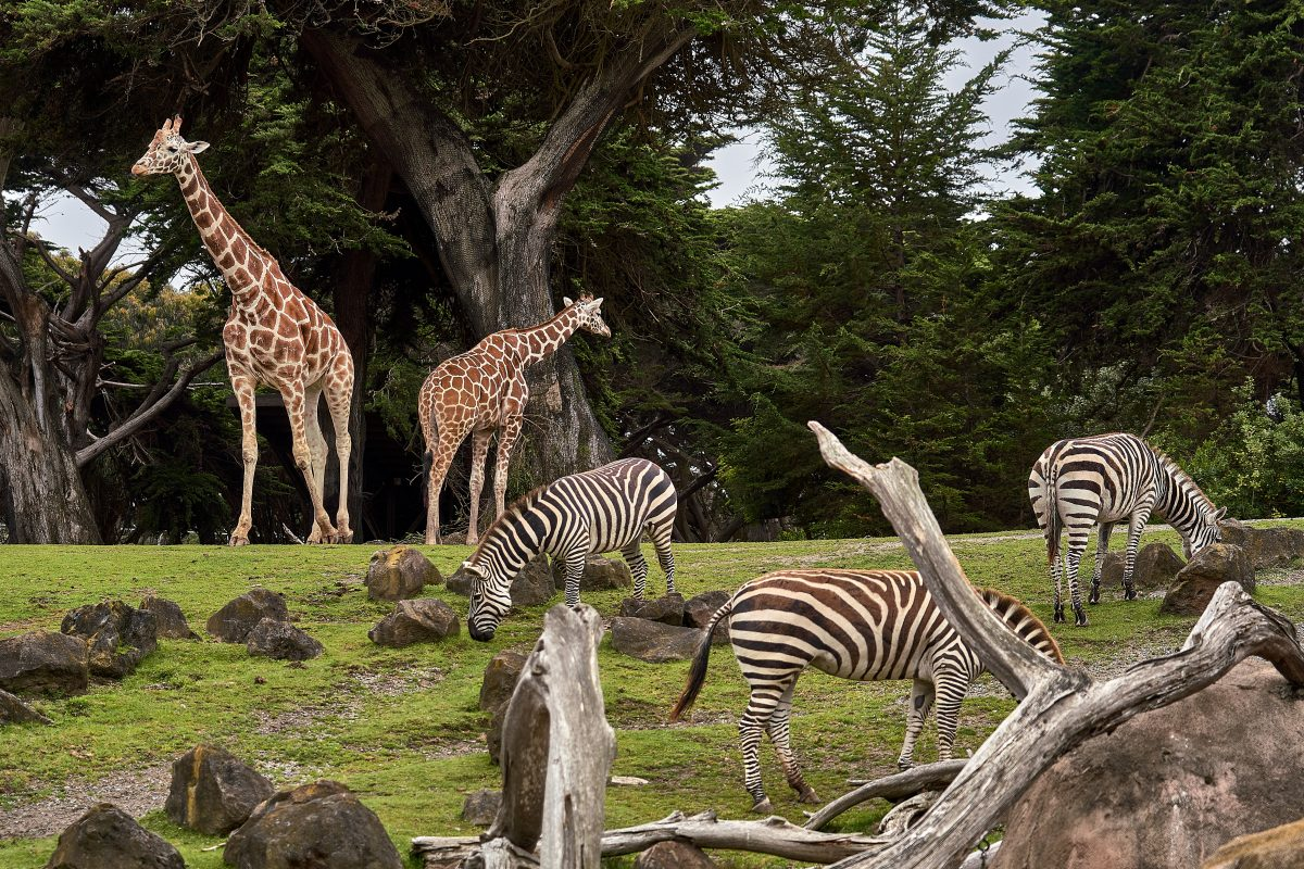 Wildlife in their enclosure during a typical day at the Wellington Zoo