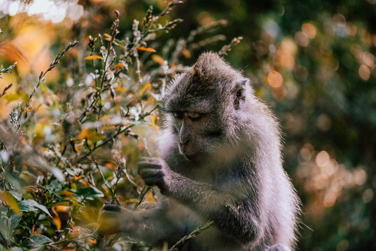Ubud Monkey Forest, Bali, Indonesia