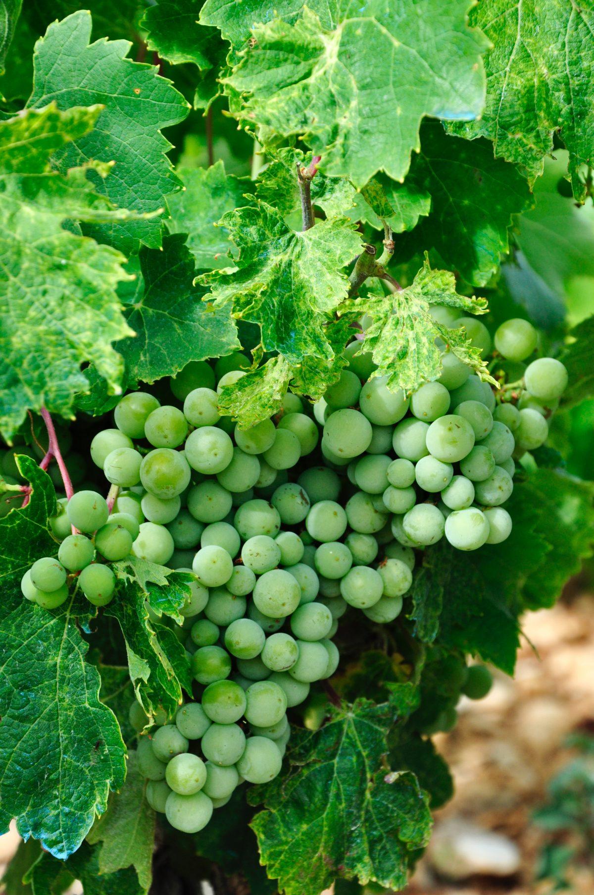 Wine Tour at Konavle Valley, Dubrovnik