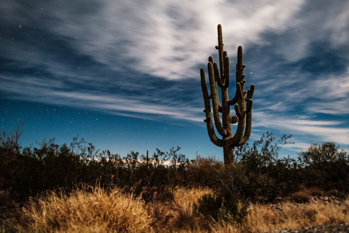Saguaro cactus with blue sky in Tucson, Arizona
