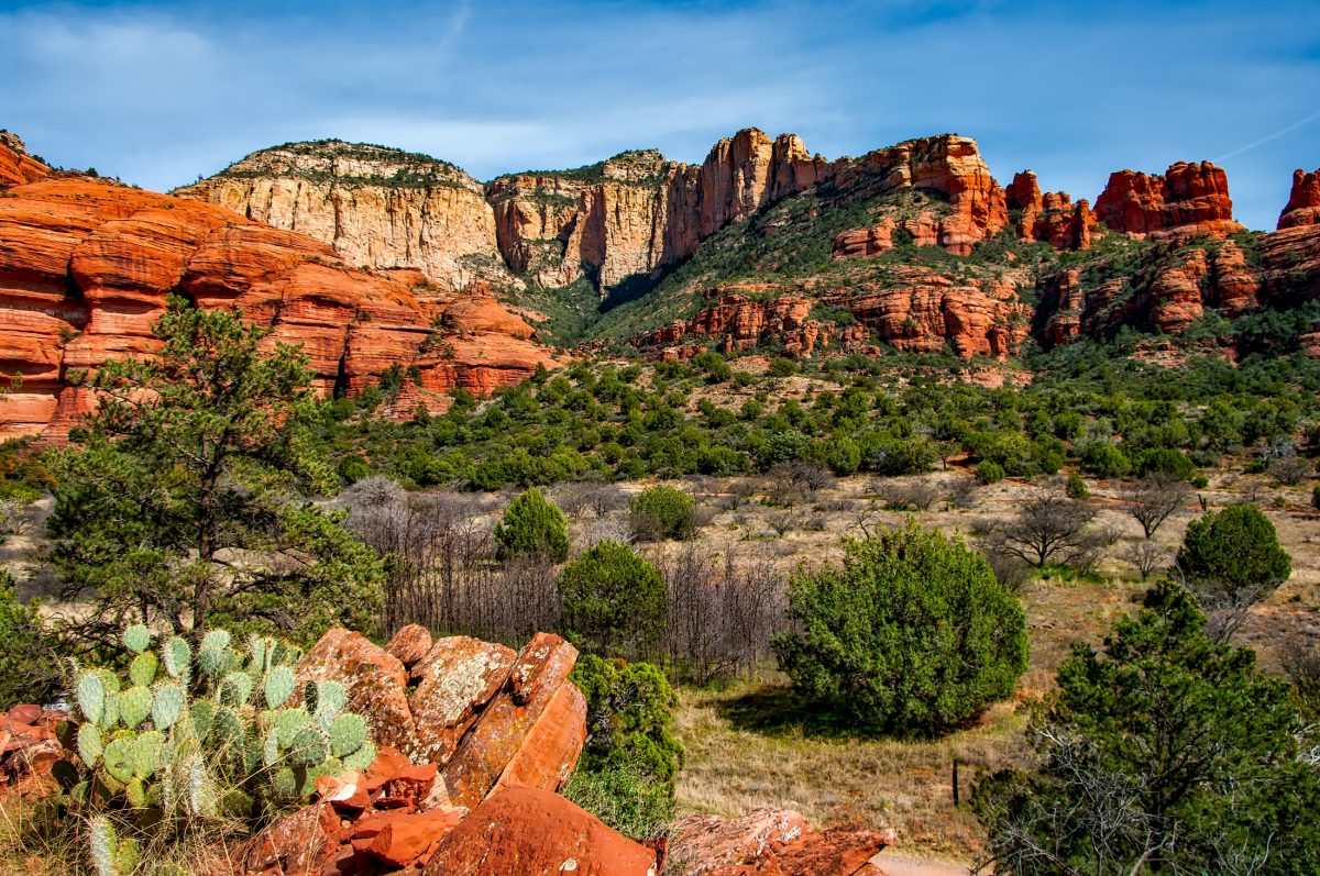 Cactus national park in Arizona