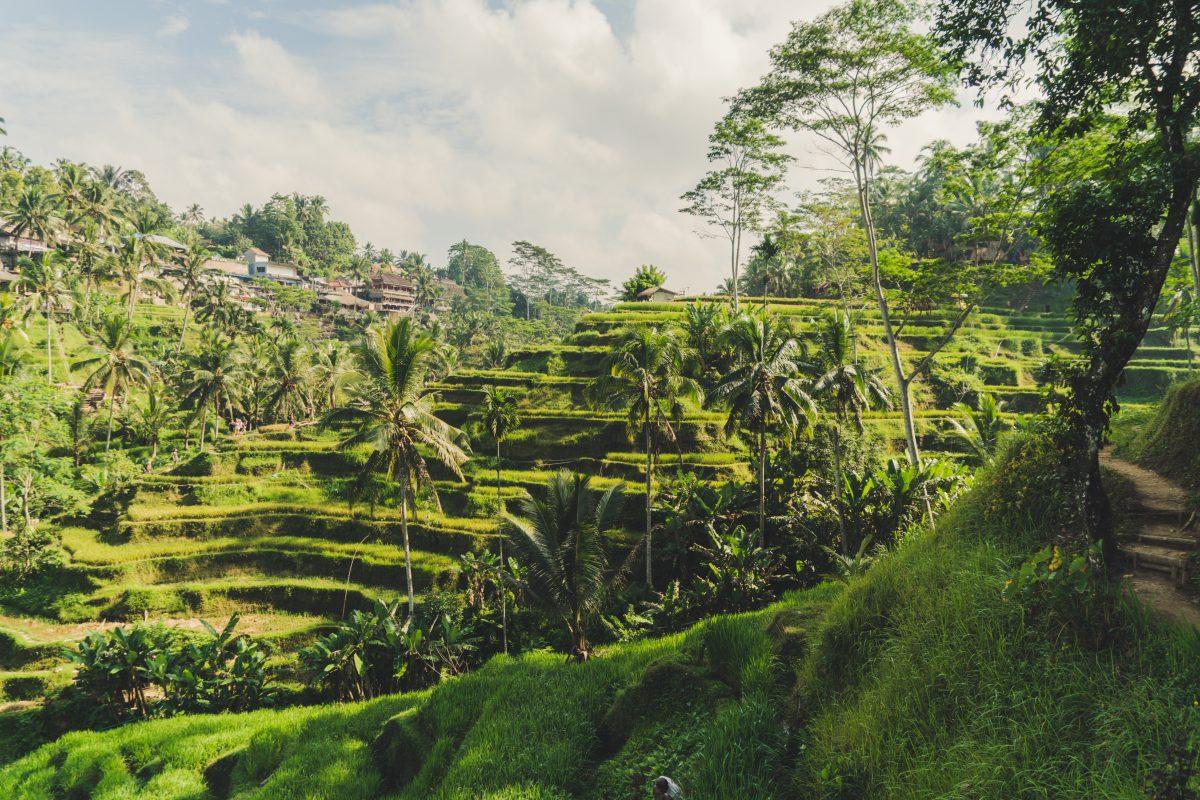 Tegallalang Rice Terrace in Ubud, Bali