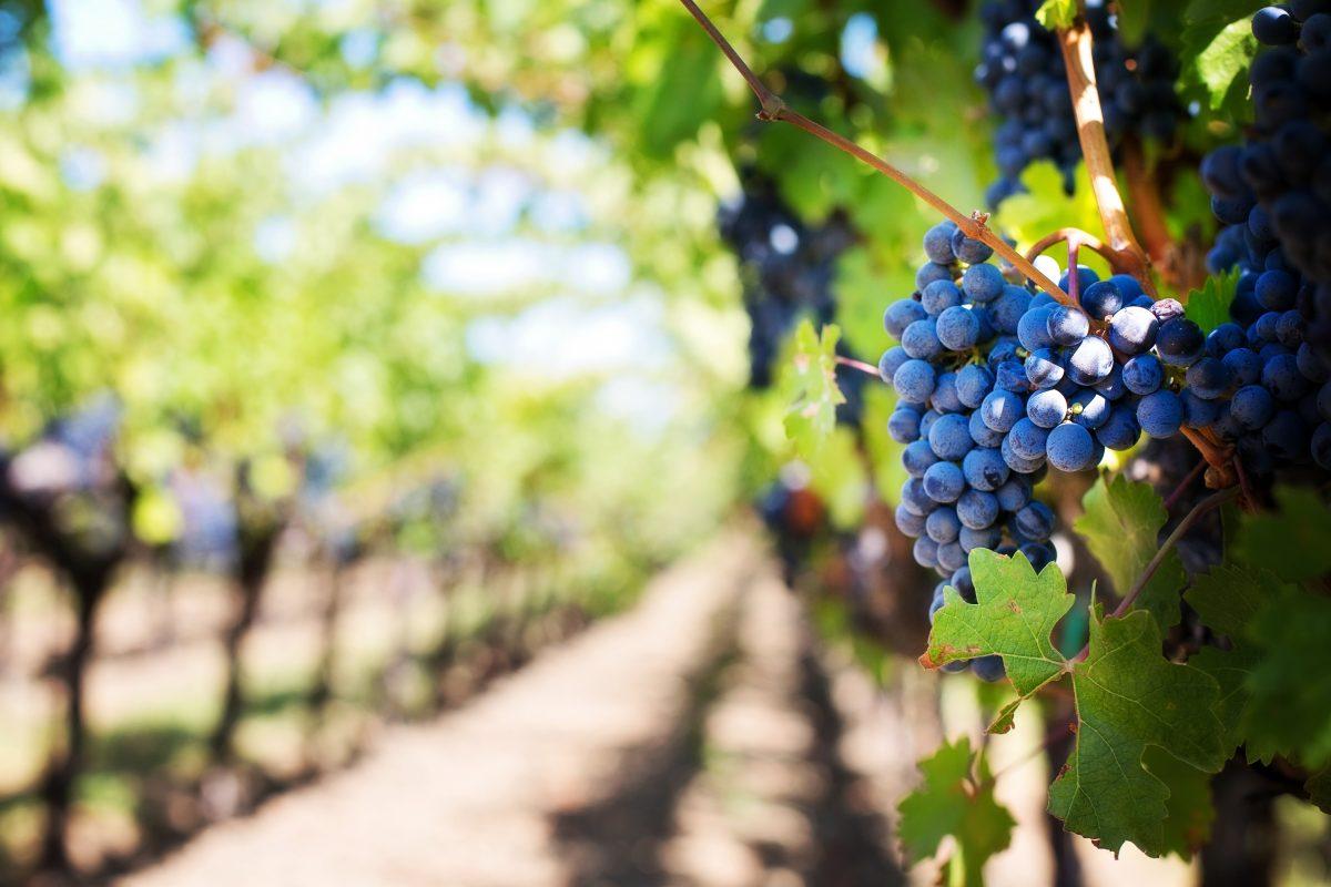 Wine tasting at Adelaide vinyards