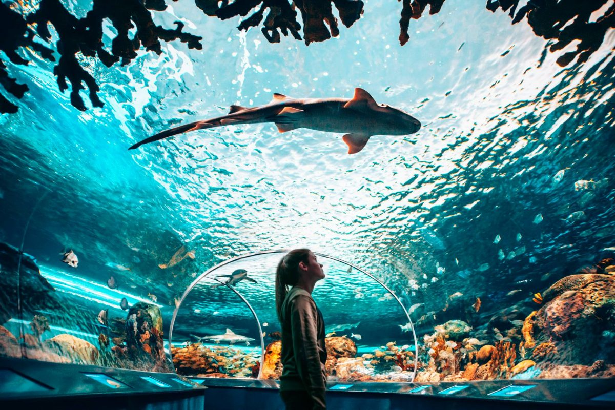 The Ripleys Aquarium, Toronto