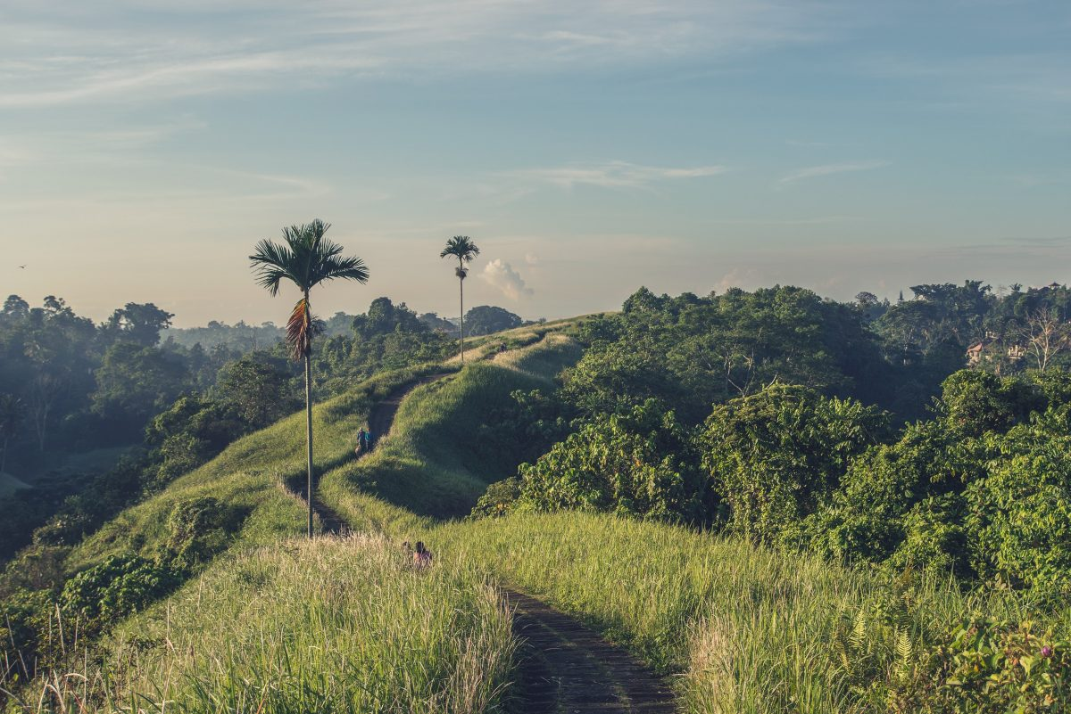 Green fields walk at Campuhan Ridge Walk, Ubud, Bali