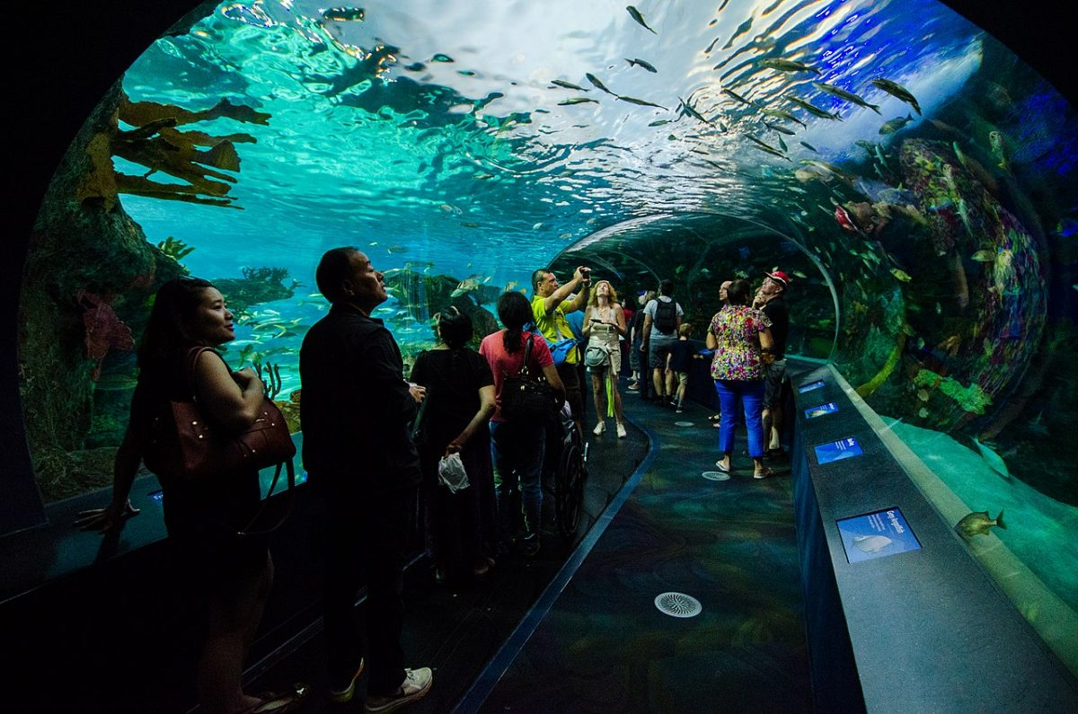 Say hello to some underwater friends at The Ripley's Aquarium