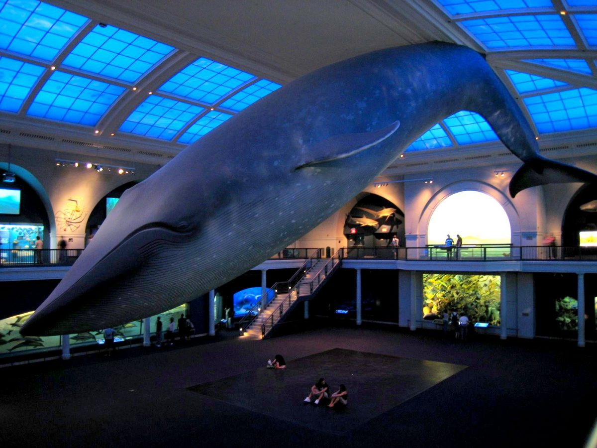 Natural History Museum, Manhattan