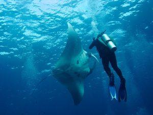 Diver, Manta Ray