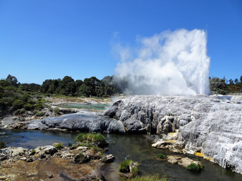 Pohutu Geyser NZ