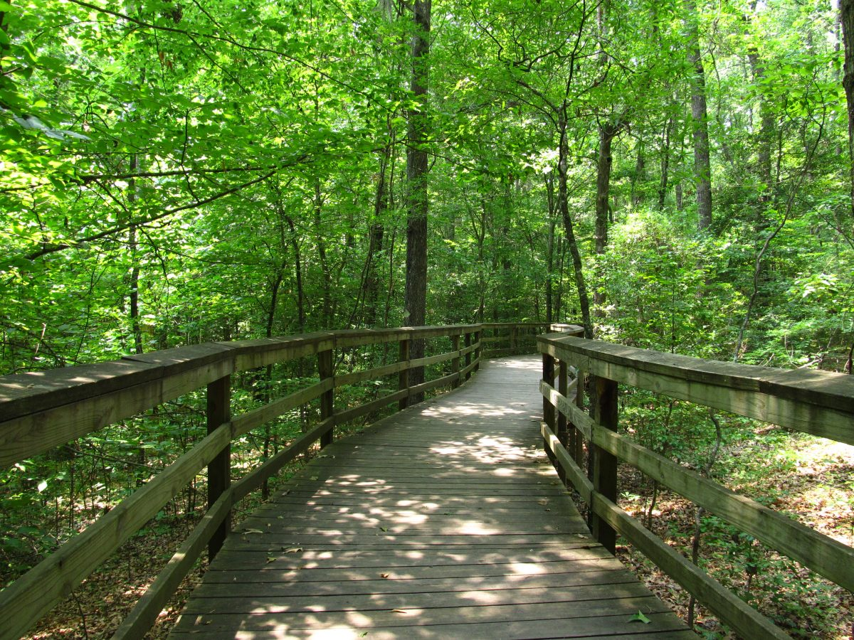 Boardwalk Trail in Congaree National Park, South Carolina