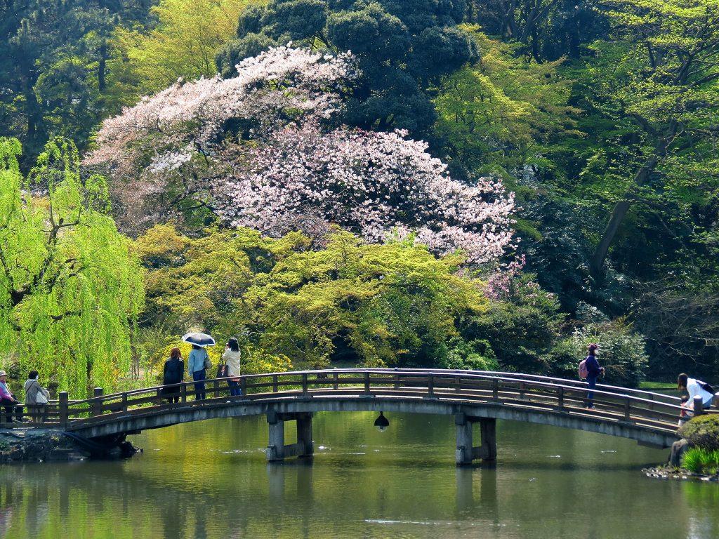 A footbridge at Shinjuku Gyoen National Garden