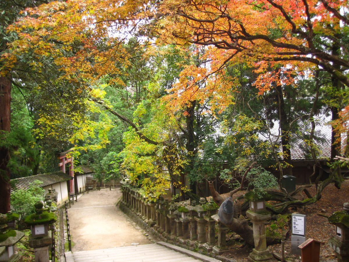 Kasuga Taisha Garden, Nara, Japan