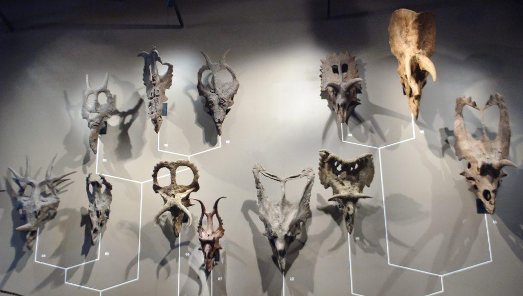 Dinosaur Skulls at the Natural History Museum of Utah