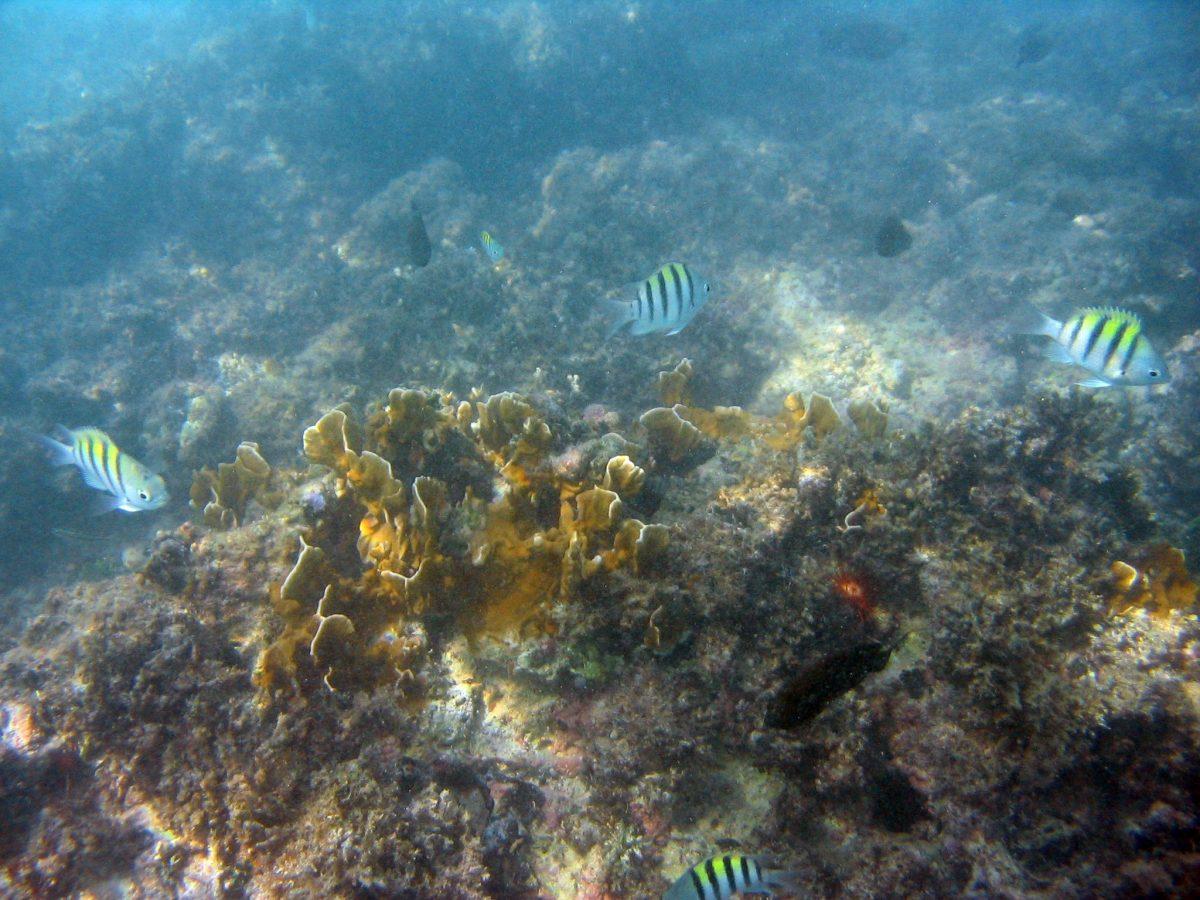 Coral snorkeling