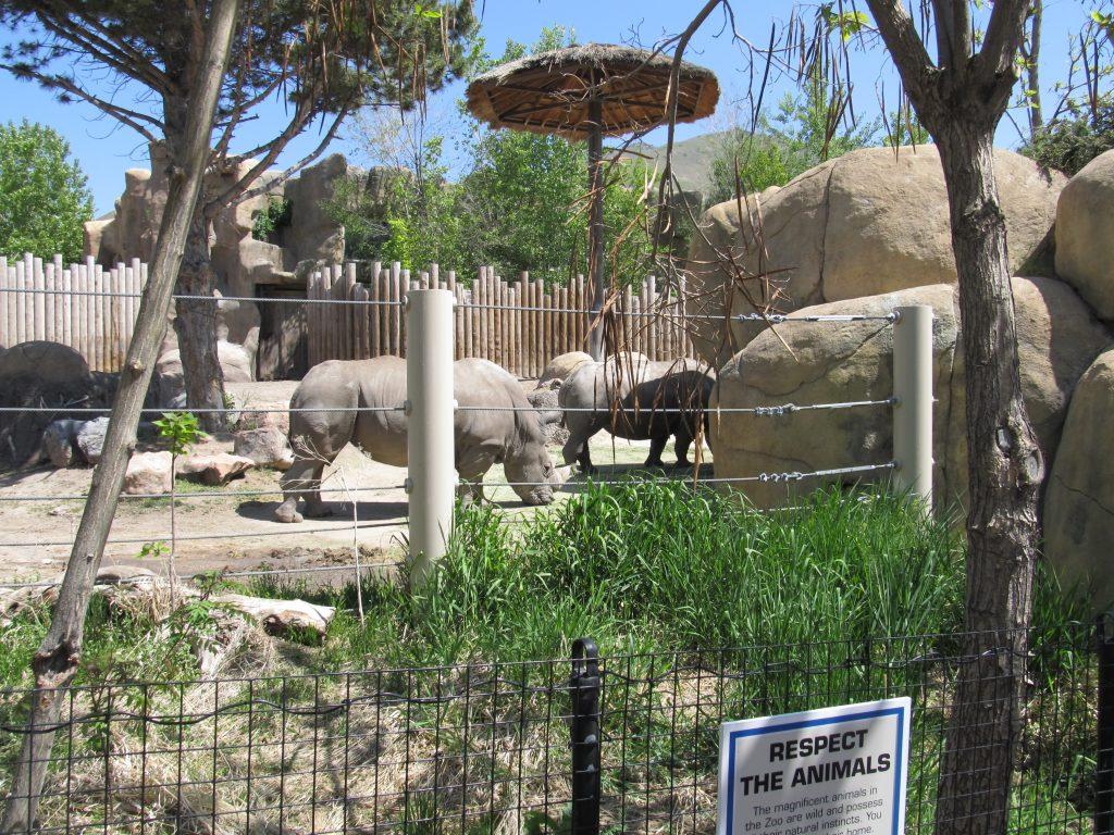 Rhinos at Hogle Zoo